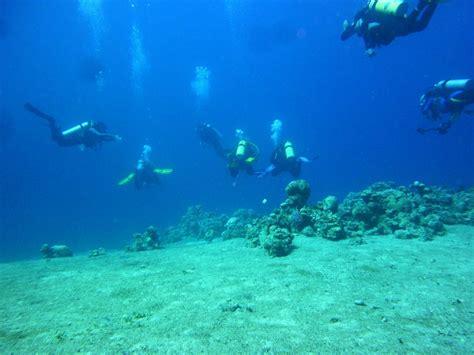 dive in aqaba aqaba dive 28 images padi scuba diving trip day 2