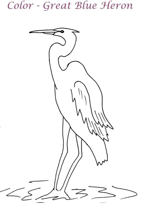 great blue heron coloring page for kids