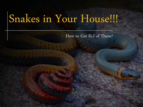 how to get snake out of house how to get rid of garden snakes photos how to get rid of garden snakes how to