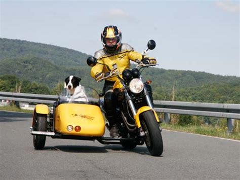 Motorrad Gespann F R Hunde by Voxan Scrambler Mit Hunde Seitenwagen Dogside