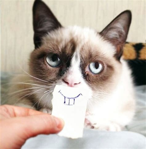 Grumpy Cat Meme Happy - image 459429 grumpy cat know your meme