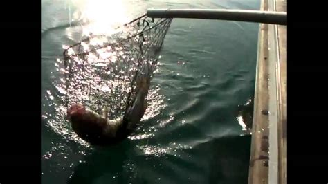 charter fishing boat dover portia cod fishing dover youtube