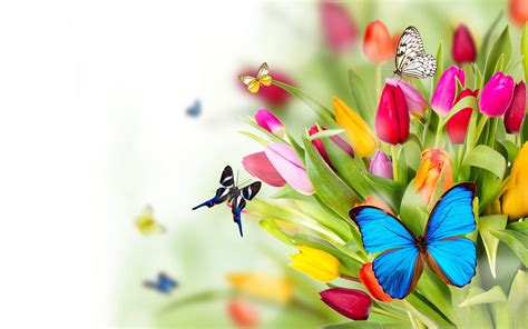 wallpaper flower and butterfly flowers butterflies wallpapers pictures photos images