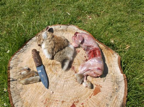 how to a rabbit how to skin and butcher a rabbit dorset bushcraft courses wildway bushcraft