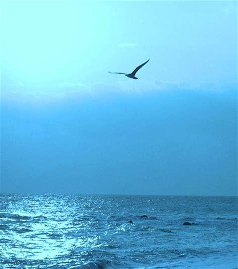 gabbiano sul mare i segreti mare le onde mare sono il movimento