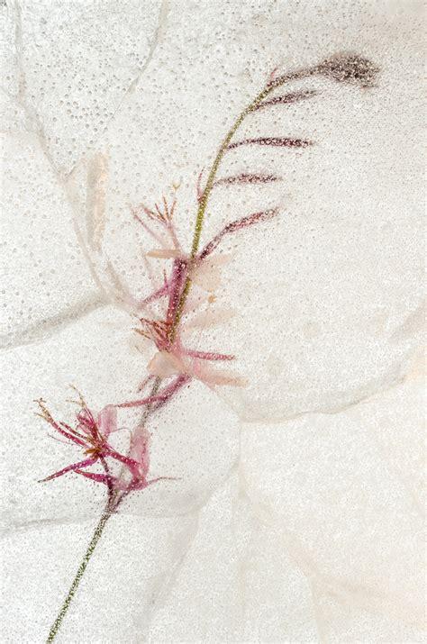 bisa diprint gambar sketsa bunga teratai berwarna