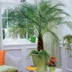 prendre soin de votre palmier d int 233 rieur jardinerie