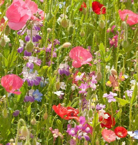 partial shade flowers partial shade mix wildflower seeds