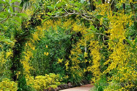 Botanic Garden Orchid Garden Singapore Botanical Botanical Garden Photography