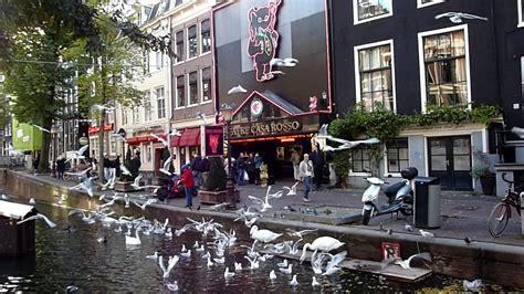 casa rosso amsterdam casa rosso light district amsterdam bird feeding
