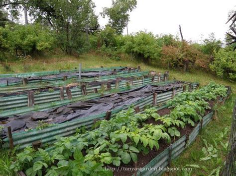 Terrace Vegetable Garden 17 Best Images About Terraced Gardens On