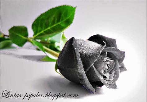wallpaper hitam cantik gambar wallpaper bunga mawar hitam cantik caption