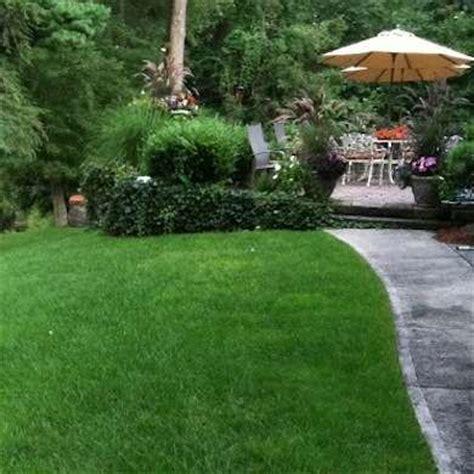 backyard grass alternatives best 25 lawn alternative ideas on pinterest thyme plant