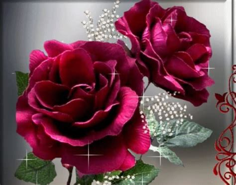 fotos que se mueven de rosas mundo de flores las flores mas hermosas