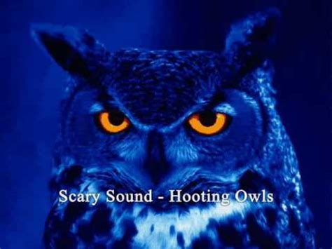 scary sound hooting owls youtube