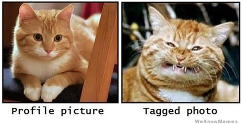 Profile Picture Memes - profile picture vs tagged photo weknowmemes