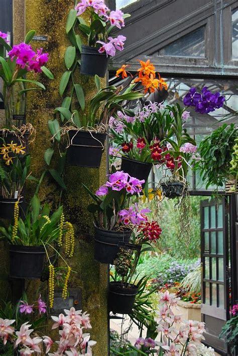 wife mother gardener plants from longwood garden s conservatory orchids pinterest