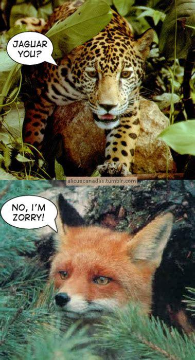 imagenes jaguar you memedroid quot jaguar you quot por buba1502