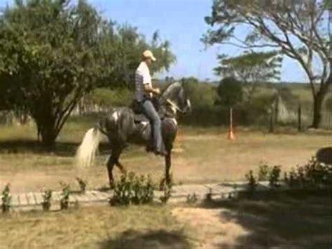caballo de la sabana youtube ponderosa estrtatega de chapala paso fino colombiano