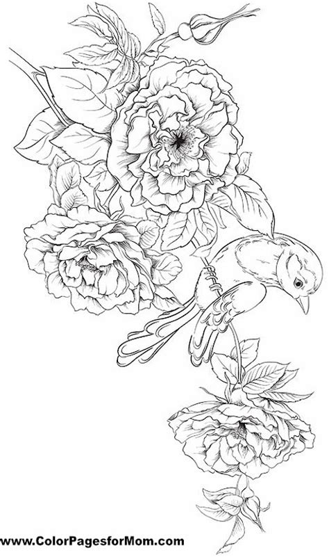 secret garden colouring book new zealand x coloring pages coloring pages