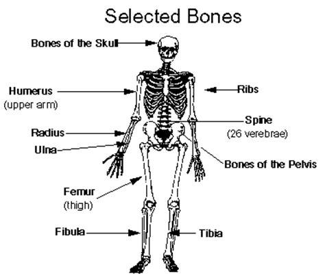 the skeletal system (bones) | medical terminology for cancer