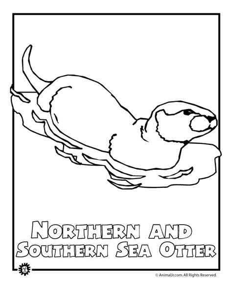 north american animals coloring page 1000 images about native american unit on pinterest