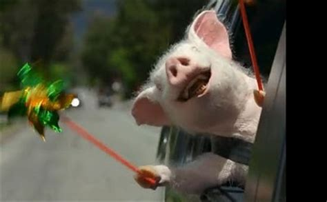adwhois geico annoying commercials any geico commercials with the pig