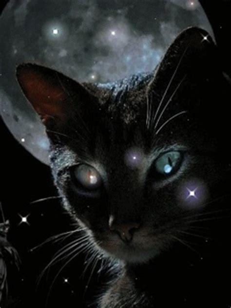 magic cat magical cat wallpaper 240x320 wallpoper 93185