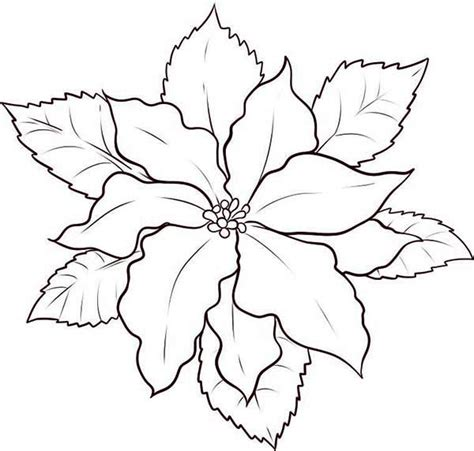 poinsettia leaves coloring pages poinsettia outline coloring home