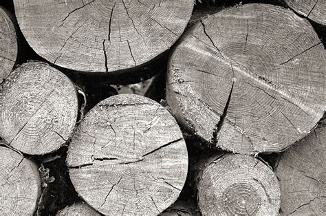 Black And White Soil Pattern free images rock branch black and white wood texture