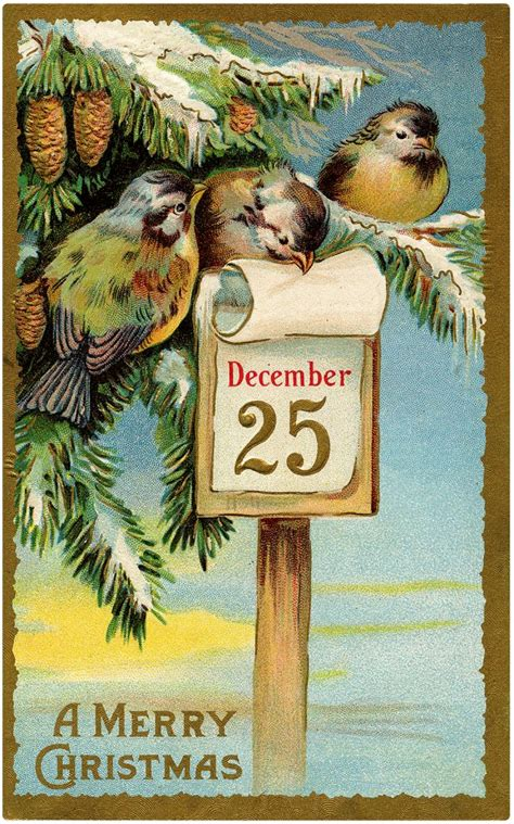 christmas birds images vintage charm  graphics fairy