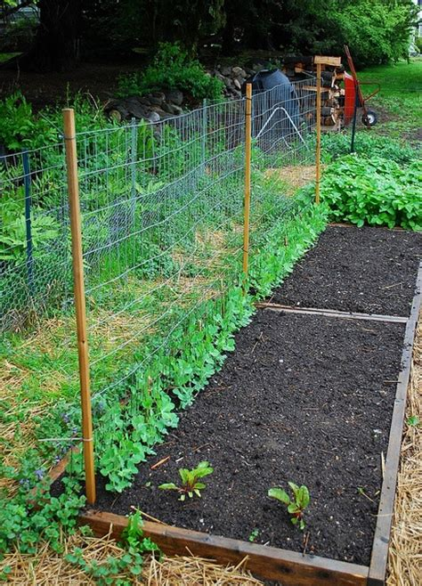 Pea Trellis The 25 Best Pea Trellis Ideas On Squash