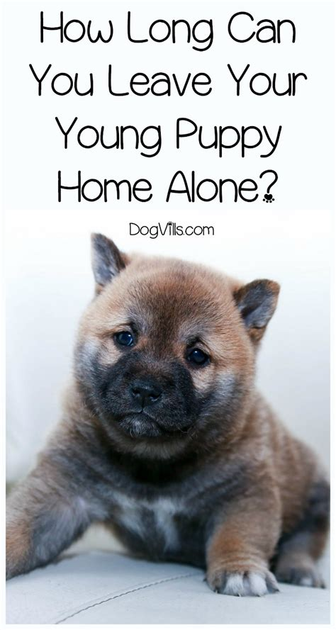 leaving puppy home alone how can you leave your puppy home alone dogvills
