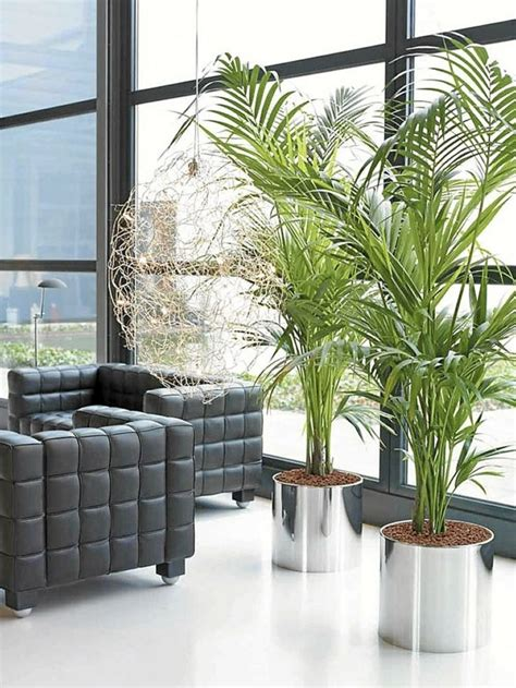 living room with plants decorate with potted plants home 60 exles as you
