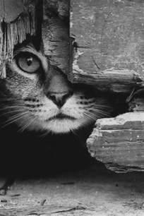 90 id 233 es de photographie noir et blanc qui peut d 233 corer