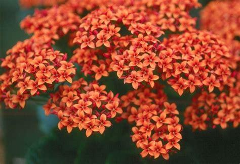 piante con fiori pianta grassa con fiori piante grasse succulenta