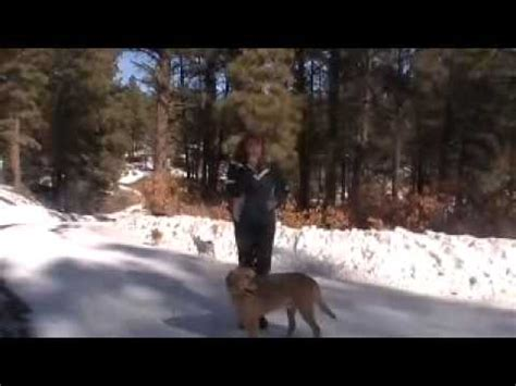 puppy jumping and biting to stay mucus how to stop from jumping and biting leash