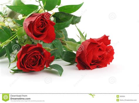 three beautiful maroon roses with decoration 2 stock
