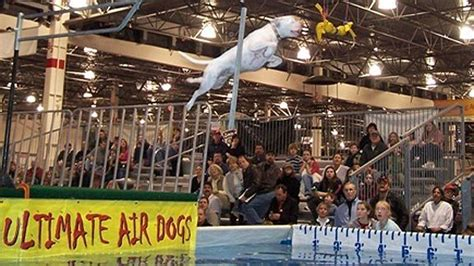 ultimate air dogs ex detroit tiger milt wilcox has to the dogs page 2 espn