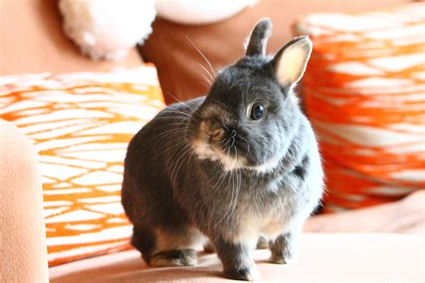 7 Facts On Bunny Rabbits by 10 Facts About Rabbits For New Pet Owners Petbooktoday
