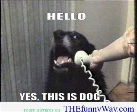 Yes This Is Dog Meme - hello yes this is dog png 400 215 327 hilarious pictures