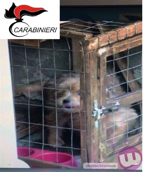 cani in gabbia chiuso in una gabbia di 50 cm coppia denunciata per