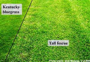 the best time of year to plant grass in your yard everett lawn care