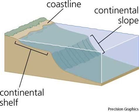 Continental Shelf by Continental Shelf Dictionary Definition Continental