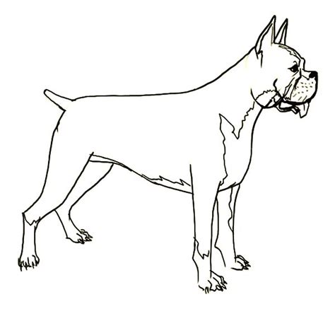 coloring pages of boxer dogs 82 boxer dog coloring book creative haven dazzling