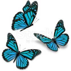 best 25 blue butterfly tattoo ideas on pinterest blue