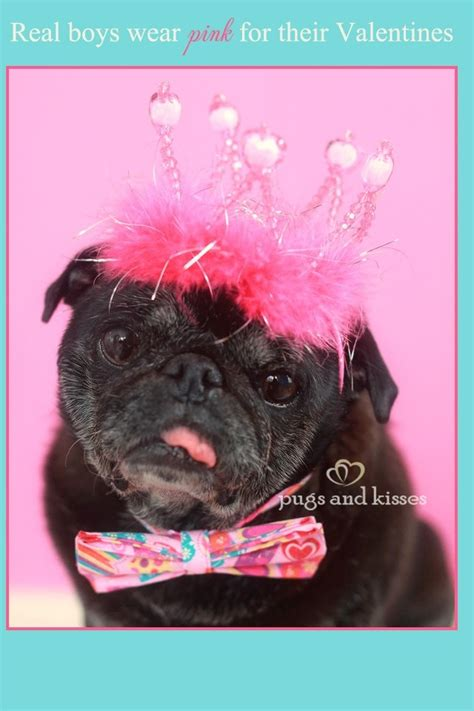 pugs and kisses 114 best images about senior pugs on