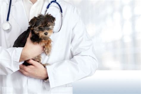test ingresso veterinaria graduatoria test veterinaria 2017 risultati