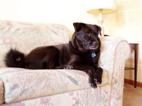 couch potatoe dogs heartworm season heartworm preventative heartworm test