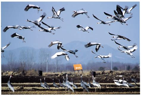 the meaning of the 38th parallel bird migration and the